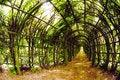 Free Tree Tunnel Stock Photo - 10134430