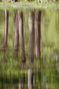 Free Tree Reflections. Stock Images - 10130624