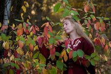 The Elf In The Autumn Forest Stock Photography