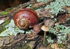 Free Snail 14 Stock Photography - 10131862