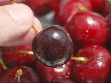 Ripe Cherry Royalty Free Stock Photo