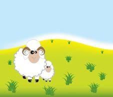 Free Big Sheep And Small Sheep Royalty Free Stock Photo - 10132575