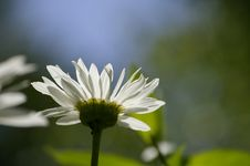 Free White Flower Stock Photos - 10132693