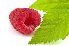Free Raspberry Isolated Royalty Free Stock Photos - 10132728