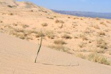 Free Kelso Sand Dunes, Mojave Desert, California Stock Photography - 10133402