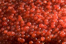 Free Red Currant 2 Royalty Free Stock Photo - 10134175