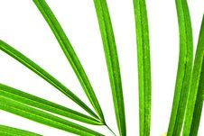 Free Palm Leaf Isolated Royalty Free Stock Image - 10134376