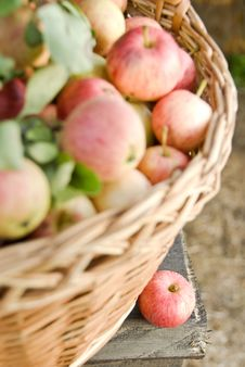 Free Apples Royalty Free Stock Images - 10134569