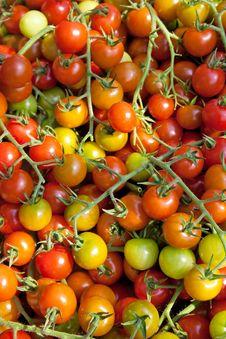 Free Tomatoes Stock Photos - 10135513