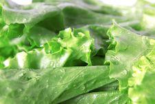 Free Green Lettuce Stock Photo - 10136710