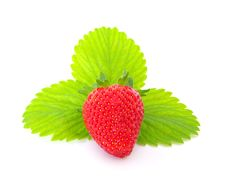 Free Strawberry Royalty Free Stock Photography - 10137047