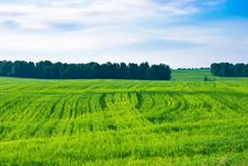 Free Wheat Field Stock Photography - 10137122