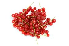 Free Red Currant Stock Photos - 10137603