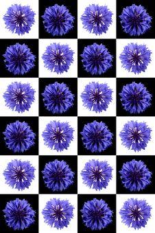 Free Cornflower Stock Photo - 10138140