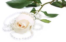 Free Romantic Background With Rose And Pearl Stock Photography - 10138432