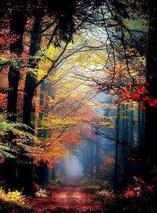Free Path Through Forest In Autumn Royalty Free Stock Image - 101321426
