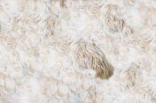 Free Dog Pelt Pattern Royalty Free Stock Images - 101324459