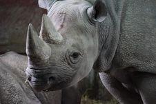 Free Black Rhinoceros Stock Image - 101372781
