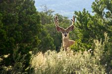 Free Buck With Antlers Forest Royalty Free Stock Photography - 101373867