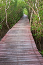 Free Wood Bridge In Mangrove Forest, Thailand Royalty Free Stock Images - 10144209