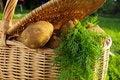 Free Raw Potato Stock Photo - 10145110