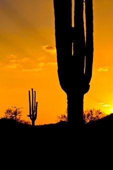 Free Saguaro Cactus Royalty Free Stock Image - 10140296
