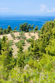 Free Olive Trees And Aegean Sea. Stock Photography - 10140562