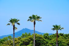 Free Tropical Coconut Trees With Majestic Mountain Stock Image - 10142091