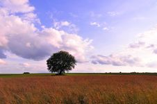 Free Tree On A Field Royalty Free Stock Images - 10142119