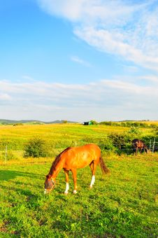 Free Horse On Green Meadow Royalty Free Stock Photo - 10142435