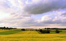 Free Wheat Field Stock Image - 10143131