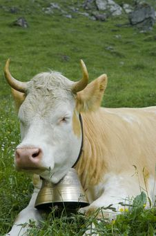 Free Face Of A Brown And White Cow In Mountain Pasture Stock Photo - 10144190
