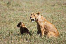 Free Lioness And Cub In Ngorongoro Stock Images - 10145244