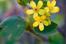 Free Beautiful Yellow Flowers Royalty Free Stock Photography - 10146317
