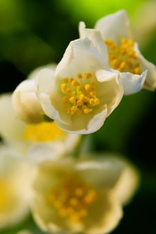 Free Beautiful White Flowers Stock Images - 10146374