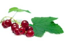 Ripe Currant Royalty Free Stock Image