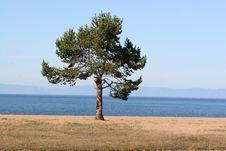 Free Tree Alone Stock Photo - 10148160