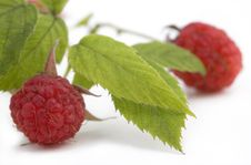 Fresh Ripe Raspberries Royalty Free Stock Image