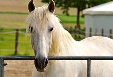 Free Horse, Mane, Bridle, Horse Like Mammal Royalty Free Stock Photography - 101453527