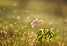 Free Water, Flora, Flower, Moisture Stock Images - 101454014