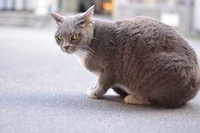 Free Cat, Mammal, Small To Medium Sized Cats, Cat Like Mammal Stock Photo - 101455380