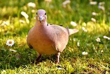 Free Bird, Fauna, Beak, Grass Royalty Free Stock Photography - 101461577