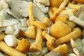 Free Mushrooms Stock Photos - 10156433