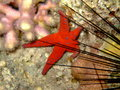 Free Starfish And Sea Urchin Royalty Free Stock Photography - 10157067