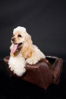 Free Cocker Puppy Royalty Free Stock Photos - 10150268