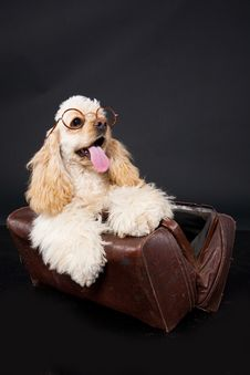 Free Cocker Puppy And Glasses Royalty Free Stock Photography - 10150347