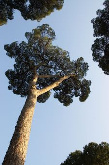 Free Trees Over Clear Sky Stock Photography - 10152082