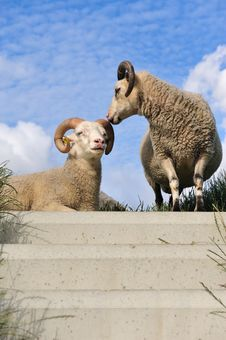 Free Sheep On Top Of The Dike Royalty Free Stock Images - 10152129