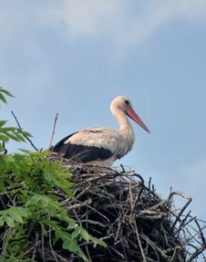 Free Stork In A Nest Stock Images - 10156754
