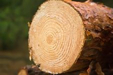 Free Log Stock Photo - 10158340